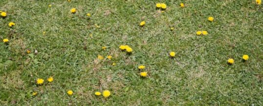 Lawn: more than just watering! Tips for maintaining green grass.
