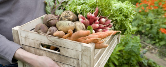 Watering Tips for your Vegetable Garden